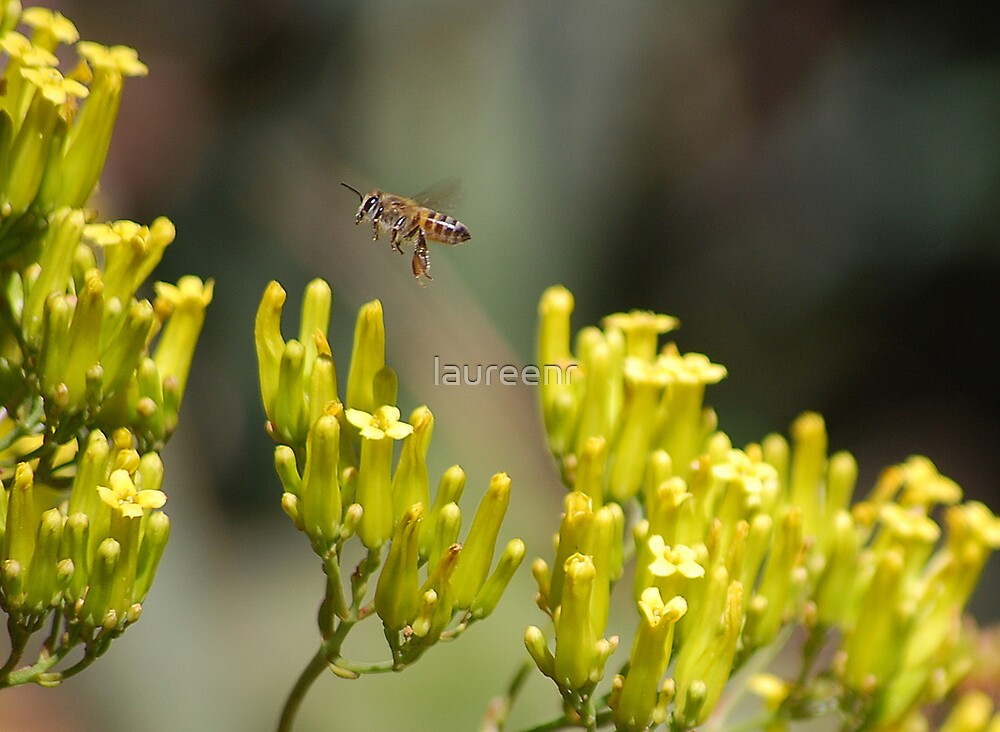 Not to bee outdone by the other bee by laureenr