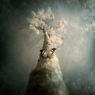 mariposa de otoño by Luis Beltrán
