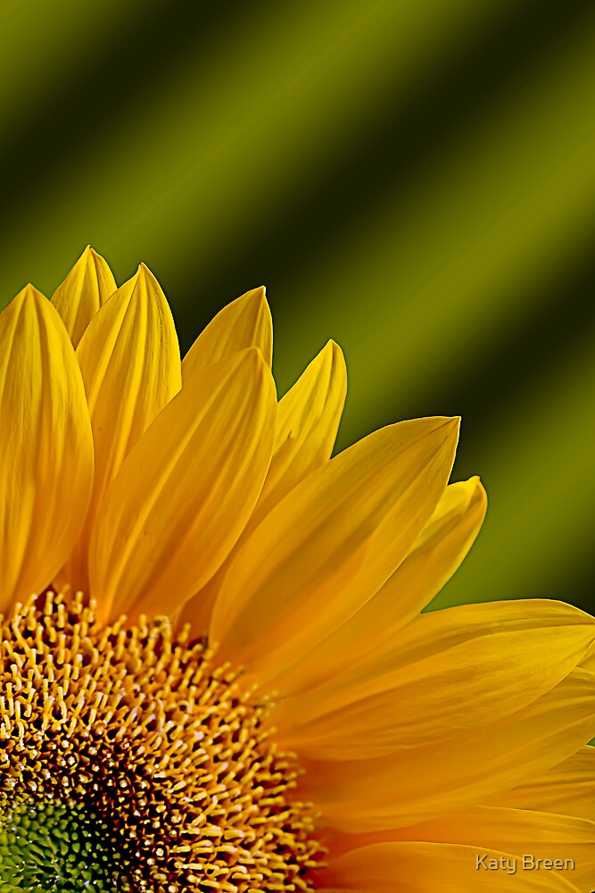 Golden Rays by Katy Breen