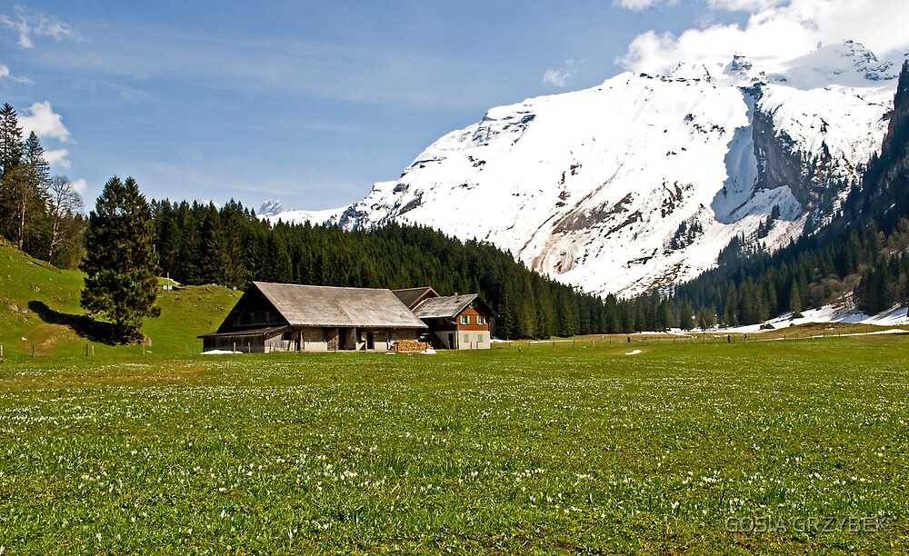 Spring in the Alps by GOSIA GRZYBEK