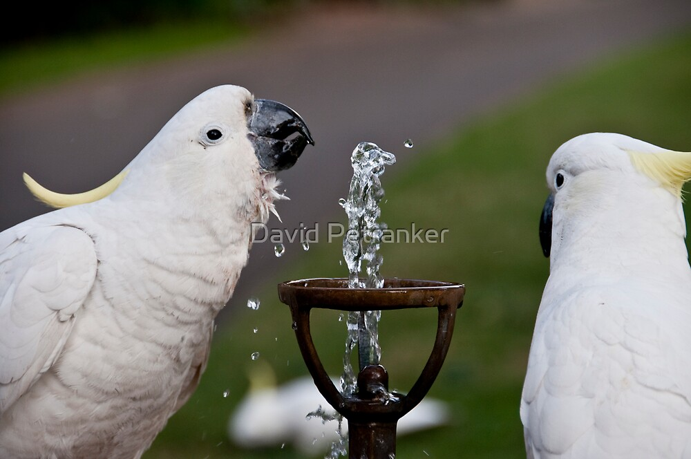 Schoolyard Gossip over the bubbler by David Petranker