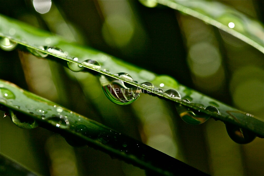 Rain by Terry Arcia