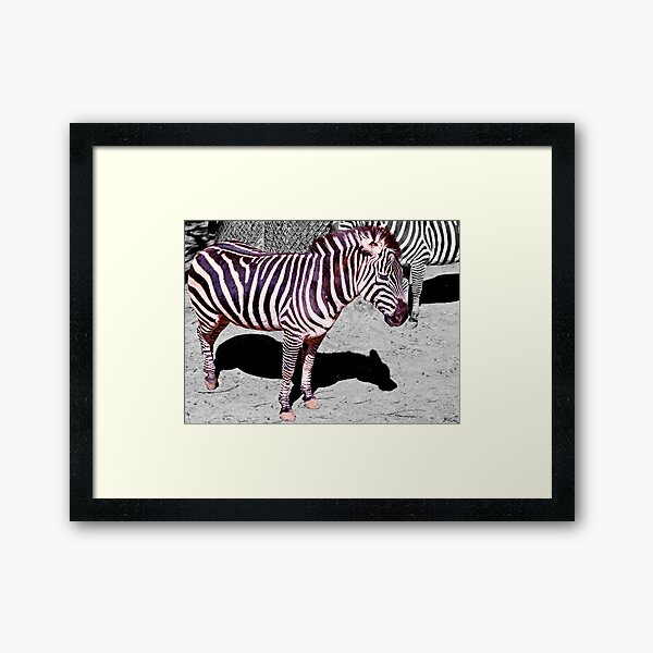 The dust in this zoo ruins my coat! Framed Art Print