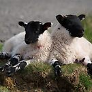 The Resting Of The Lambs by dougie1