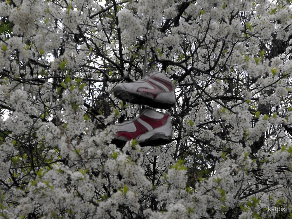 Shoe Tree by katpix