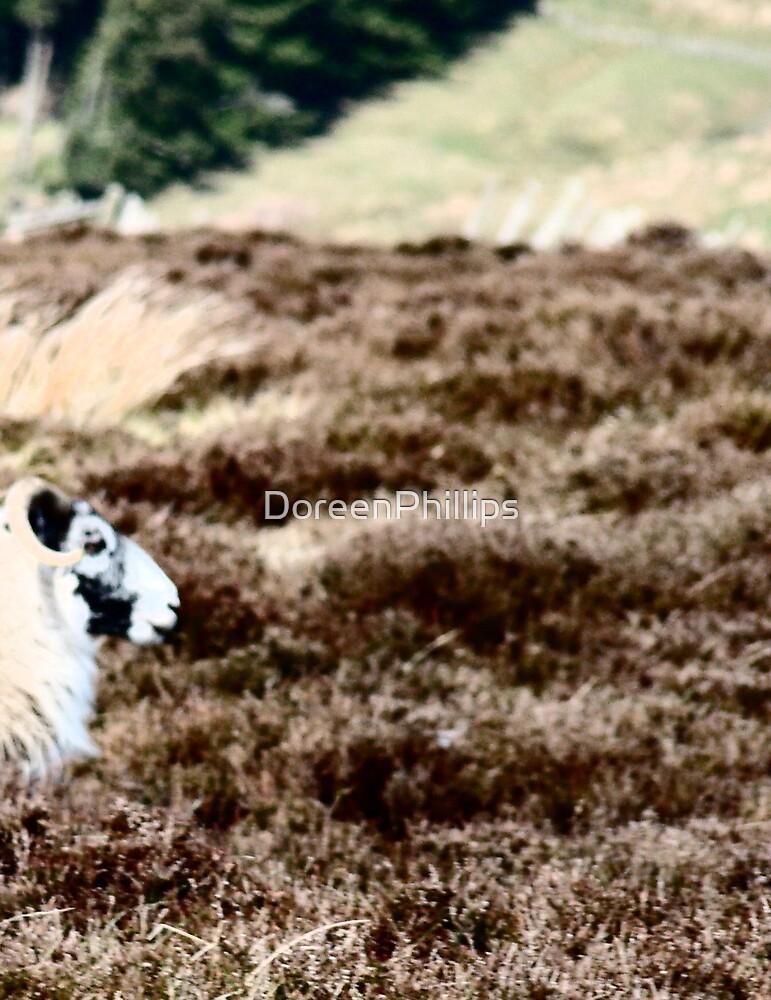 A Sheep's Heid.....x by DoreenPhillips
