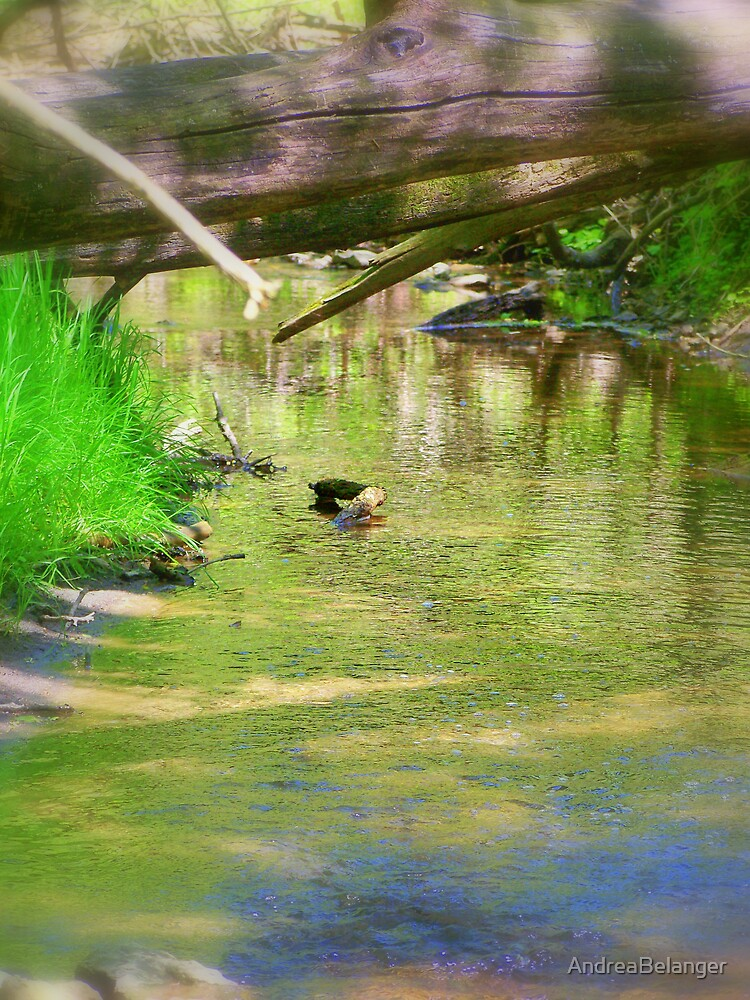 Creek in Darlington, WI by AndreaBelanger