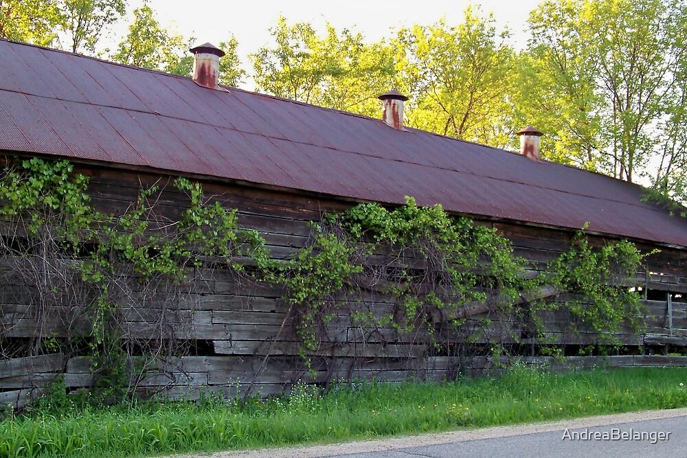 Overgrown Barn by AndreaBelanger