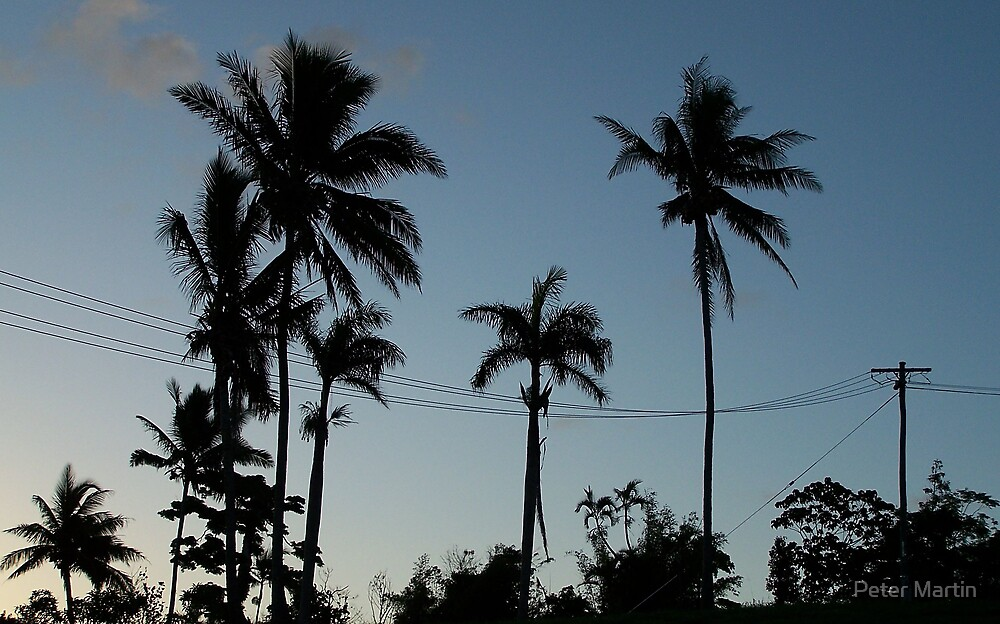 Mission Palms by Peter Martin