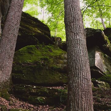 Rim Rock Trees by lindsayosborne