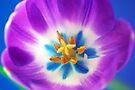 Tulip Tapestry by Extraordinary Light