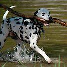 Fetch! by tantricpark182