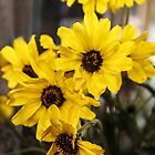 Wildflowers Bouquet  by Heather Friedman