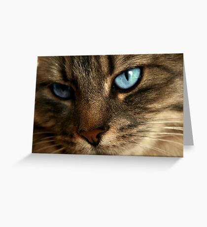 Close Up Of Blue Eyes Cat Greeting Card