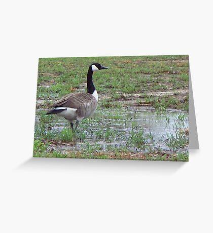 Wild Goose Chase 3 Greeting Card