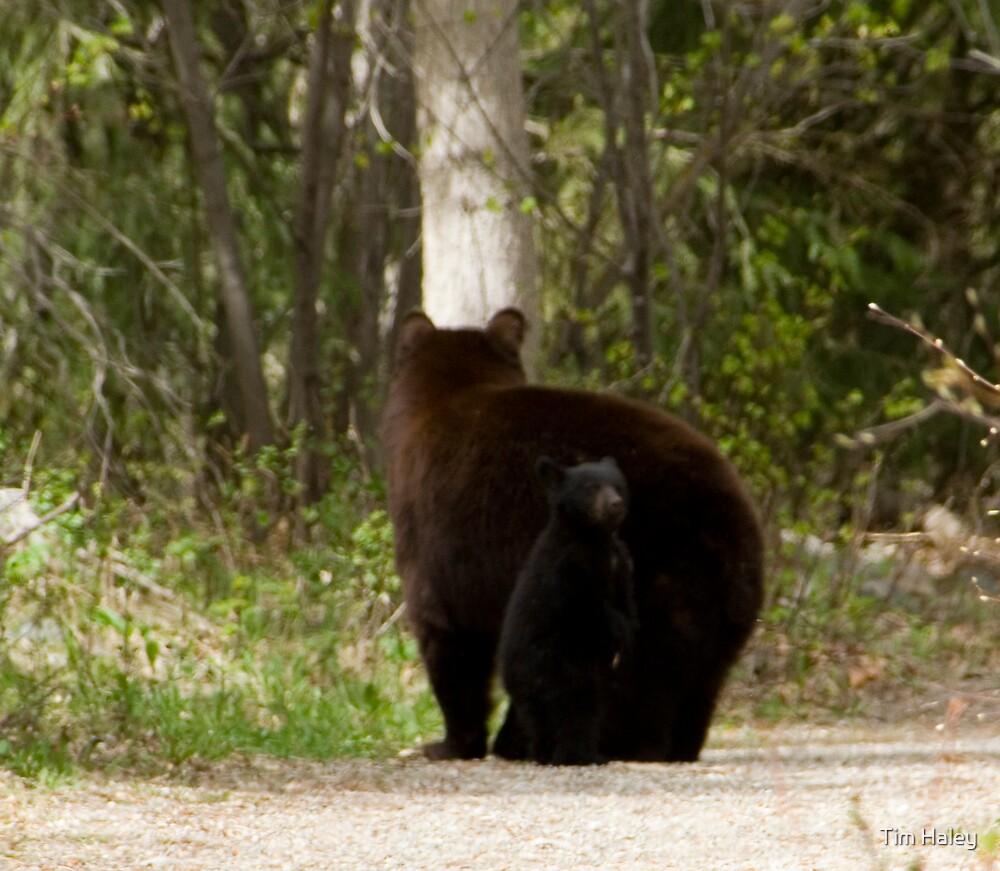 bears by Tim Haley