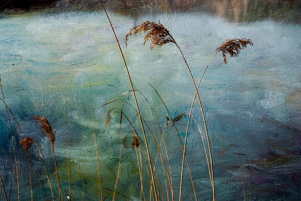 Reeds 3 by Zhaomin