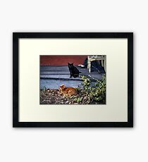 Two Cats in the Yard Framed Print