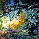 Bullfrog In The Swamp by Cynthia48