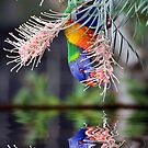 Bird Reflection by Walter Colaiaco