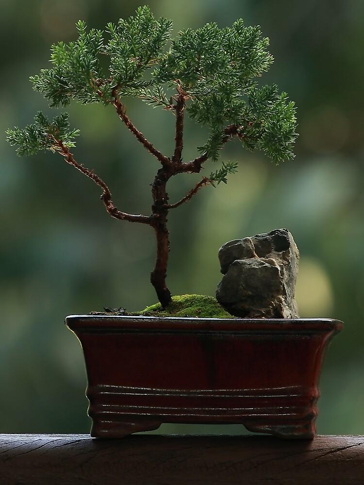 Little Tree Postcard By Heyyou Redbubble