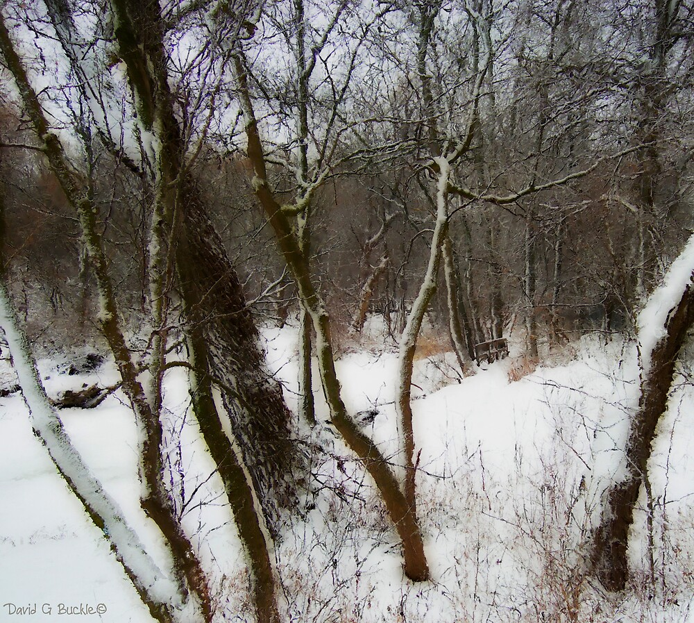 Winter Path by David Buckle
