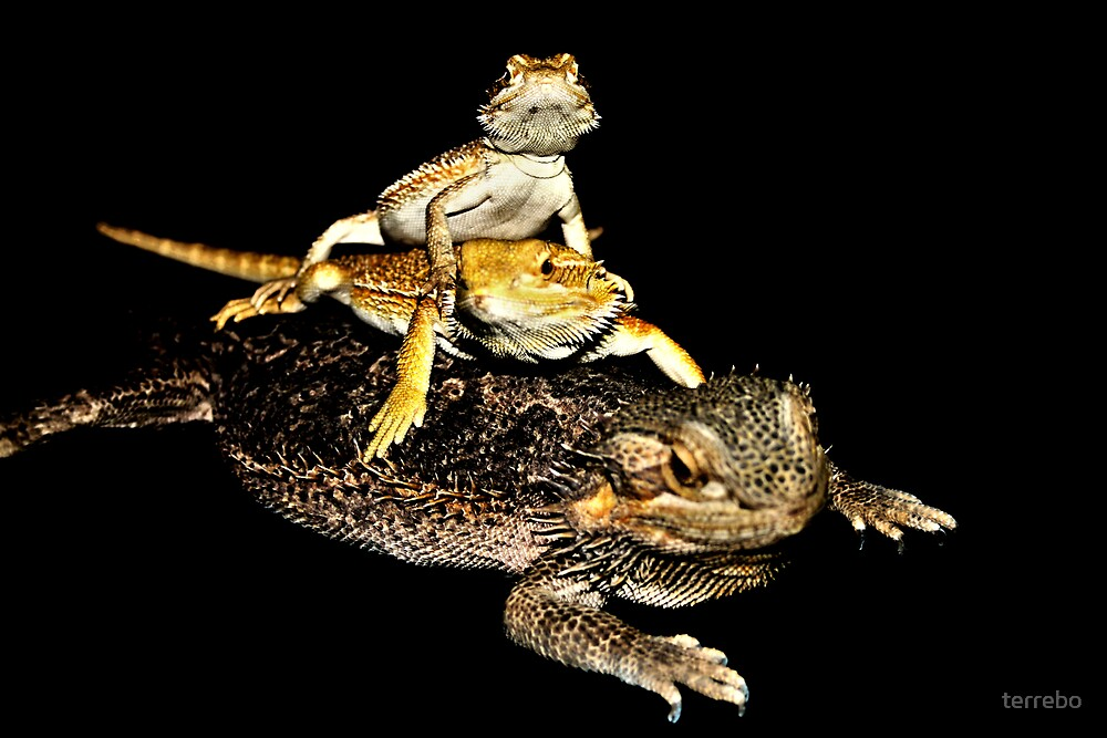 Three Lizard by terrebo