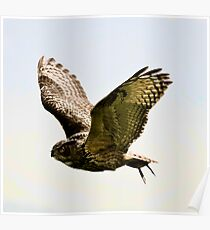 Bubo Poster