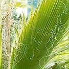 Palm Leaf by MariaVikerkaar
