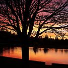 Sunset Tree by Debbie  Roberts