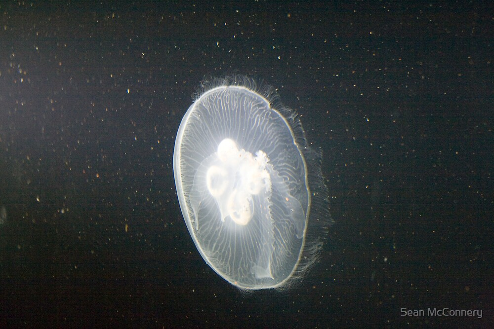 Moon Jellyfish 1 by Sean McConnery