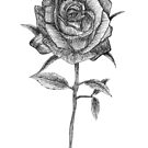 A rose by any other name... by Reilly Ballantyne