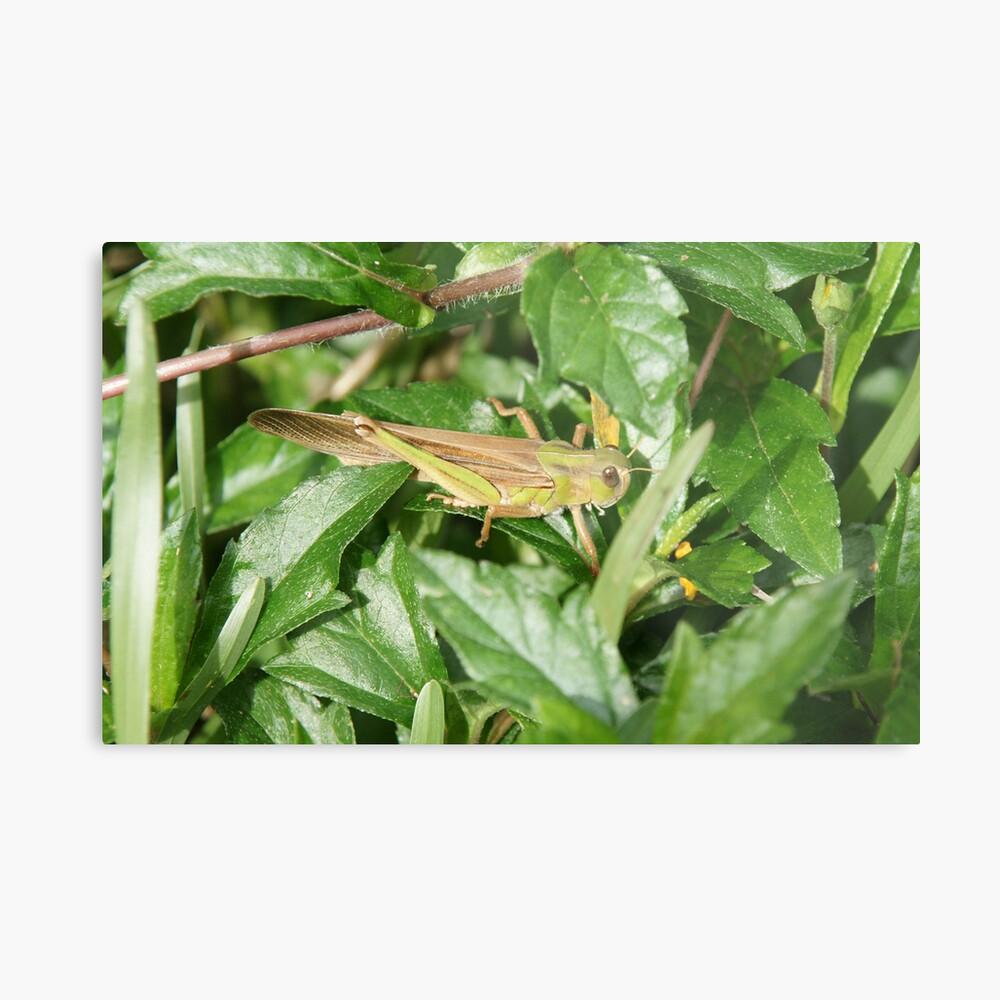 Camouflage Grasshopper Metal Print