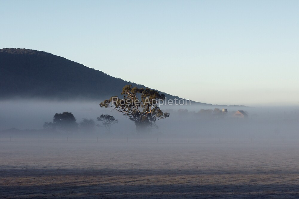 What lies in the mist... by Rosie Appleton