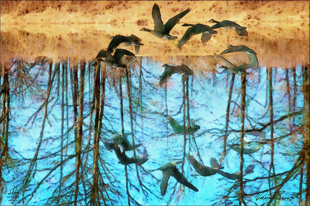 Refection by David Buckle