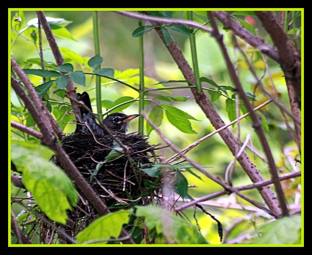 IN THE NEST by BOLLA67