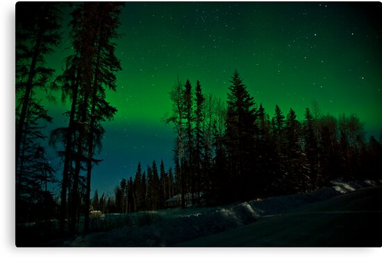 Wintergreen by peaceofthenorth
