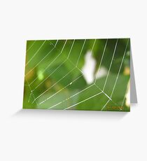 Cobweb..... Greeting Card