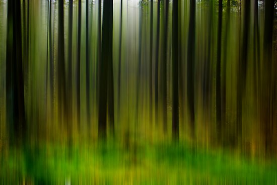 Abstract Trees by Trevor Kersley