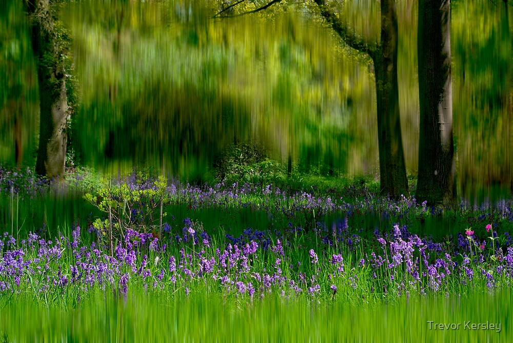 Bluebells by Trevor Kersley