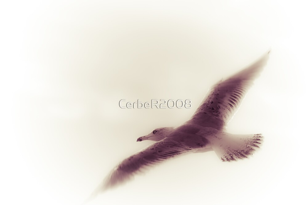 Seagull by CerbeR2008