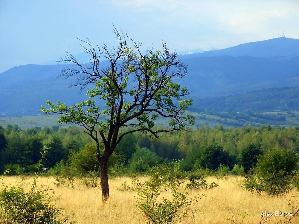 Lone Tree by Alex Boros
