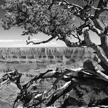 Tree Overlooking the Canyon by GVAZDesigns