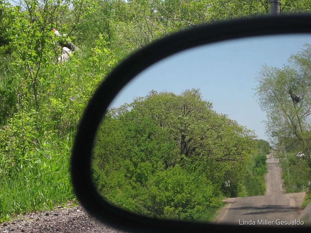 Looking Back by Linda Miller Gesualdo