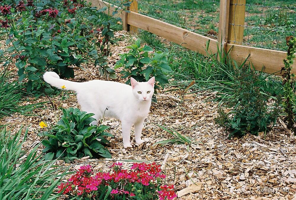 In the Garden by Kelley Kidd