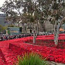 250,000 Poppies and Counting by Larry Lingard-Davis