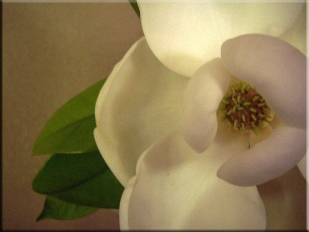 Eye of the Magnolia by DottieDees