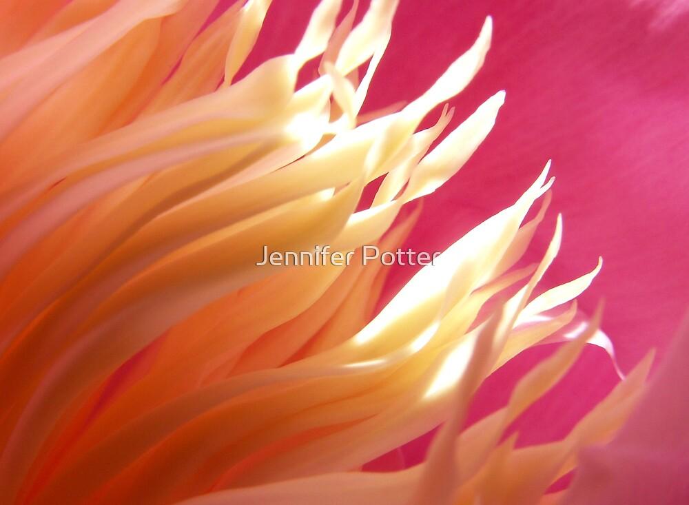 The Birth of Beauty by Jennifer Potter