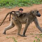Chacma Baboon and her Infant (Papio ursinus) by Yair Karelic