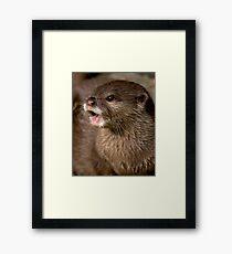 Short clawed otter! Framed Print